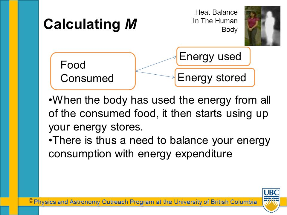 Physics and Astronomy Outreach Program at the University of British Columbia Physics and Astronomy Outreach Program at the University of British Columbia Calculating M When the body has used the energy from all of the consumed food, it then starts using up your energy stores.