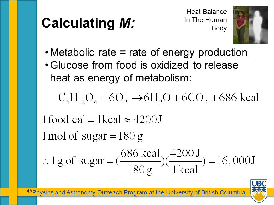 Physics and Astronomy Outreach Program at the University of British Columbia Physics and Astronomy Outreach Program at the University of British Columbia Calculating M: Metabolic rate = rate of energy production Glucose from food is oxidized to release heat as energy of metabolism: Heat Balance In The Human Body
