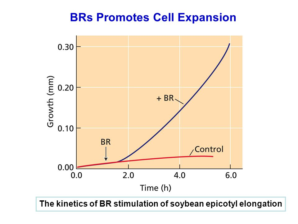 BRs Promotes Cell Expansion The kinetics of BR stimulation of soybean epicotyl elongation