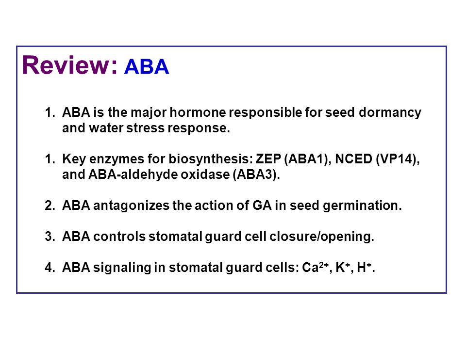 Review: ABA 1.ABA is the major hormone responsible for seed dormancy and water stress response. 1.Key enzymes for biosynthesis: ZEP (ABA1), NCED (VP14