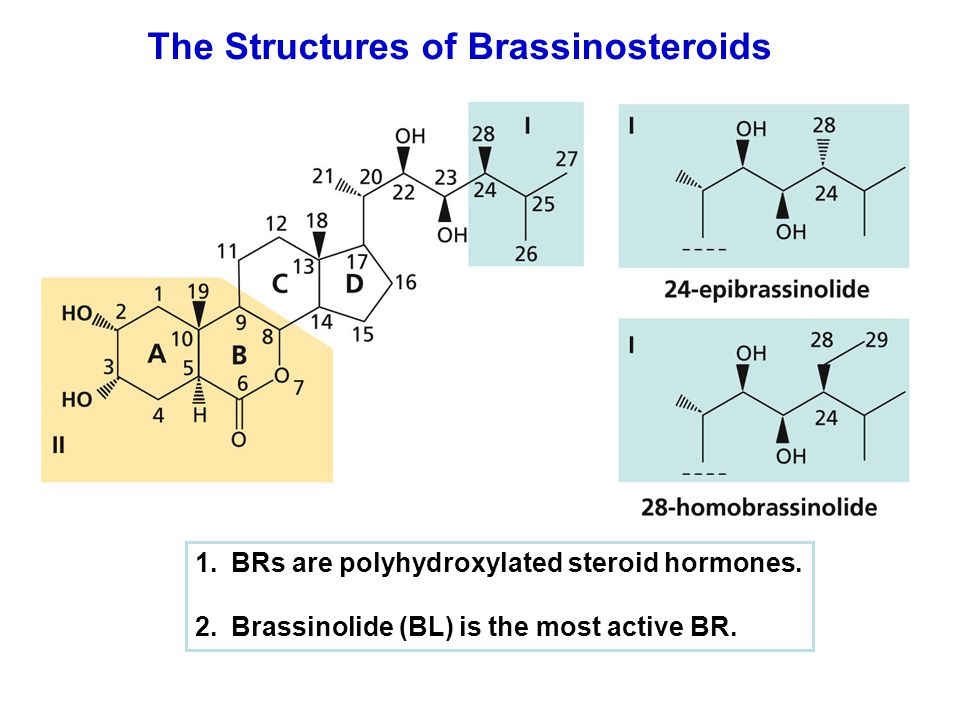 The Structures of Brassinosteroids 1.BRs are polyhydroxylated steroid hormones. 2.Brassinolide (BL) is the most active BR.