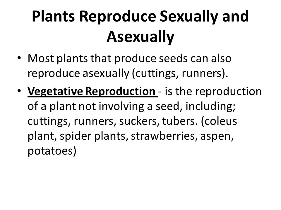 Plants Reproduce Sexually and Asexually Most plants that produce seeds can also reproduce asexually (cuttings, runners). Vegetative Reproduction - is