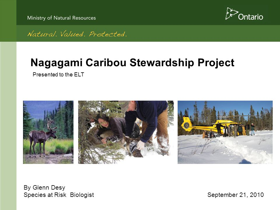 Nagagami Caribou Stewardship Project By Glenn Desy Species at Risk Biologist September 21, 2010 Presented to the ELT