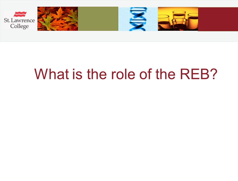 What is the role of the REB?