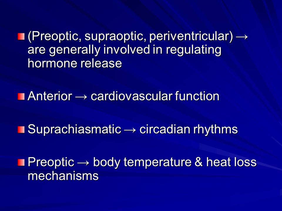 (Preoptic, supraoptic, periventricular) → are generally involved in regulating hormone release Anterior → cardiovascular function Suprachiasmatic → ci