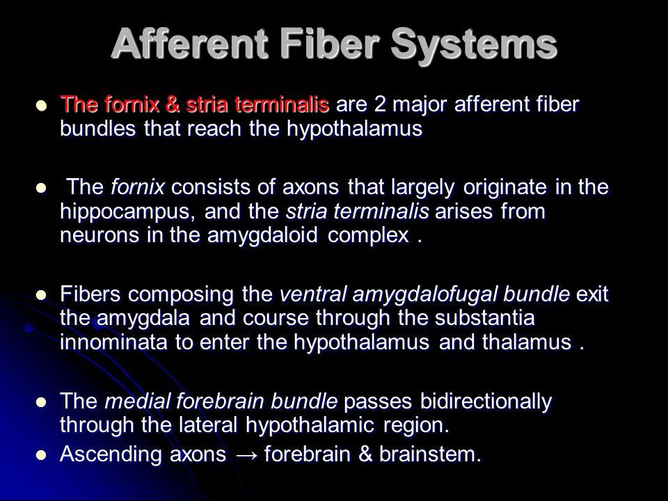 Afferent Fiber Systems The fornix & stria terminalis are 2 major afferent fiber bundles that reach the hypothalamus The fornix & stria terminalis are