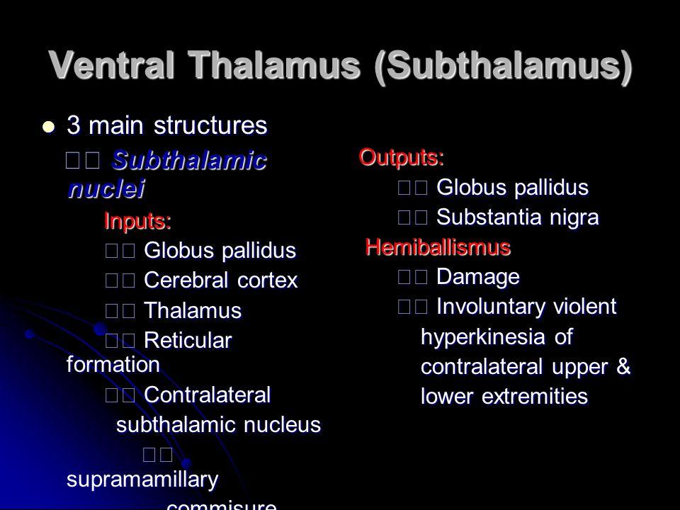 Ventral Thalamus (Subthalamus) 3 main structures 3 main structures Subthalamic nuclei Subthalamic nuclei Inputs: Inputs: Globus pallidus Globus pallid