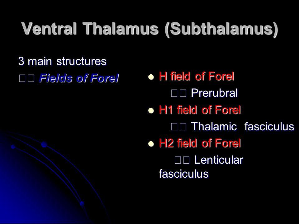 Ventral Thalamus (Subthalamus) 3 main structures Fields of Forel Fields of Forel H field of Forel H field of Forel Prerubral Prerubral H1 field of For