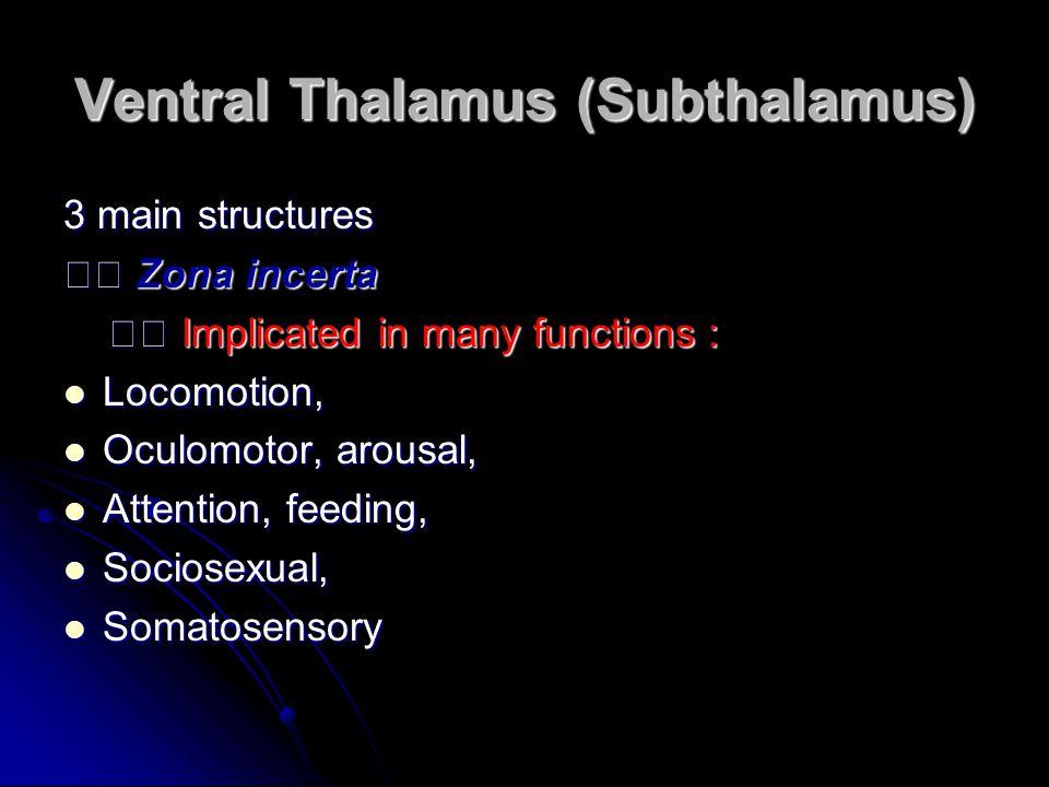 Ventral Thalamus (Subthalamus) 3 main structures Zona incerta Zona incerta Implicated in many functions : Implicated in many functions : Locomotion, L