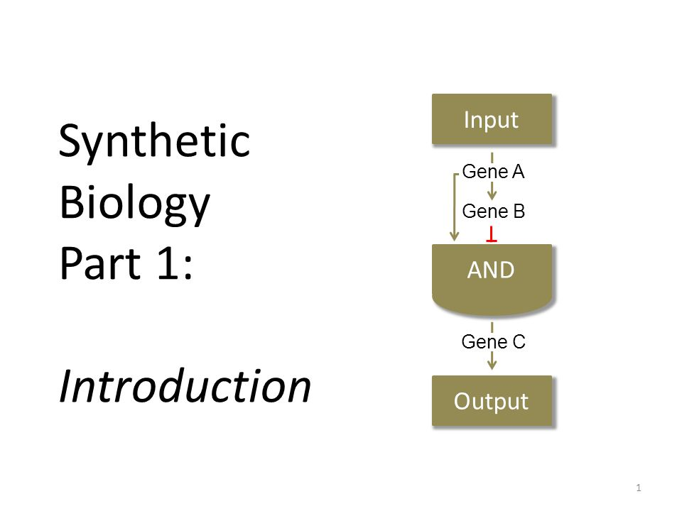 Synthetic Biology Part 1: Introduction Input Output Gene A Gene B Gene C 1