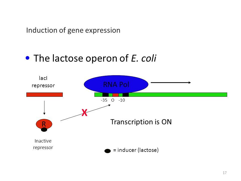 The lactose operon of E.
