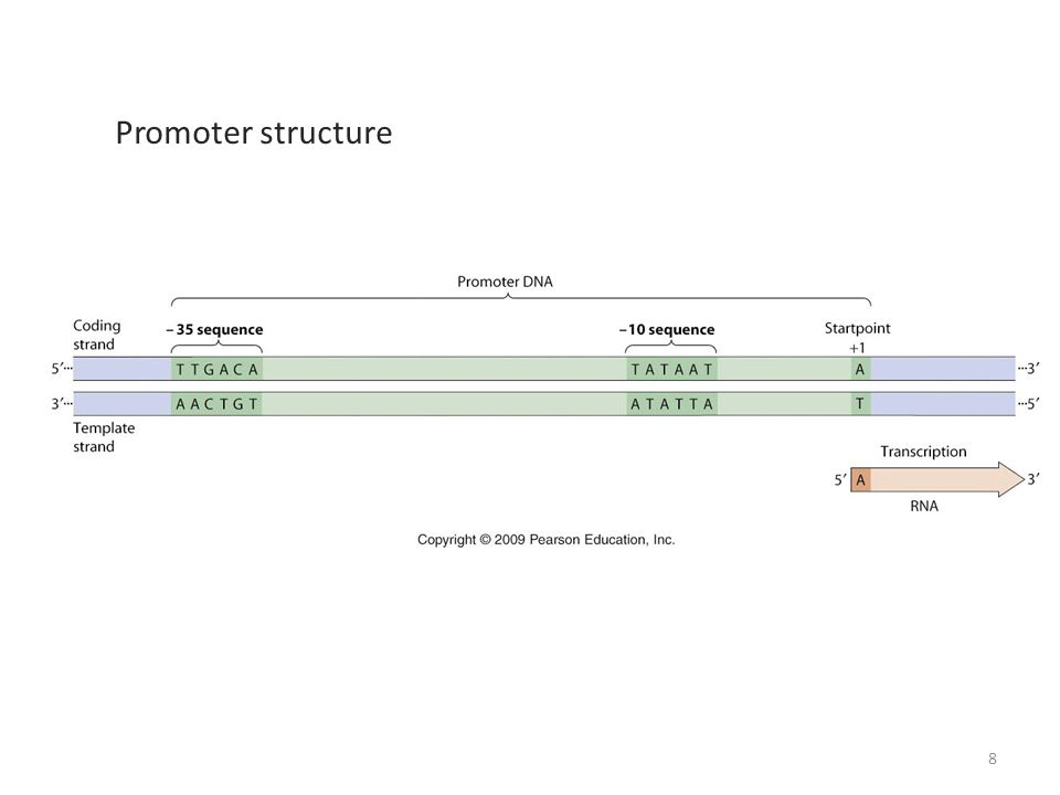 Promoter structure 8