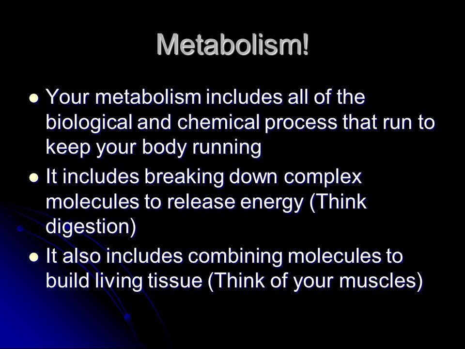 Metabolism.