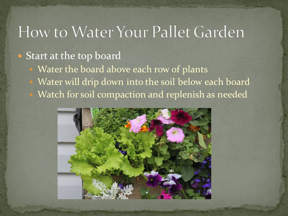 Start at the top board Water the board above each row of plants Water will drip down into the soil below each board Watch for soil compaction and replenish as needed