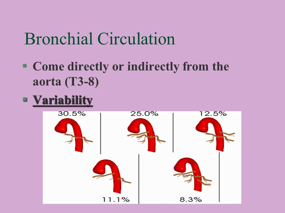 Bronchial Circulation §Come directly or indirectly from the aorta (T3-8) §Variability