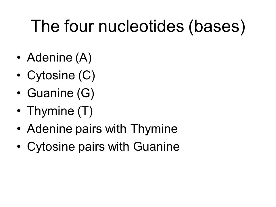 The four nucleotides (bases) Adenine (A) Cytosine (C) Guanine (G) Thymine (T) Adenine pairs with Thymine Cytosine pairs with Guanine