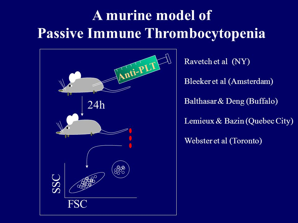 A murine model of Passive Immune Thrombocytopenia Anti-PLT 24h FSC SSC Ravetch et al (NY) Bleeker et al (Amsterdam) Balthasar & Deng (Buffalo) Lemieux & Bazin (Quebec City) Webster et al (Toronto)