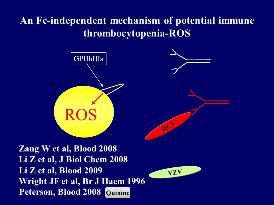 An Fc-independent mechanism of potential immune thrombocytopenia-ROS Zang W et al, Blood 2008 Li Z et al, J Biol Chem 2008 Li Z et al, Blood 2009 GPIIbIIIa ROS HCV Wright JF et al, Br J Haem 1996 VZV Quinine Peterson, Blood 2008