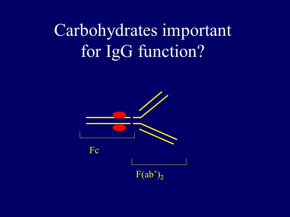 IVIg is IgG Fc F(ab') 2 Intravenous Immunoglobulin