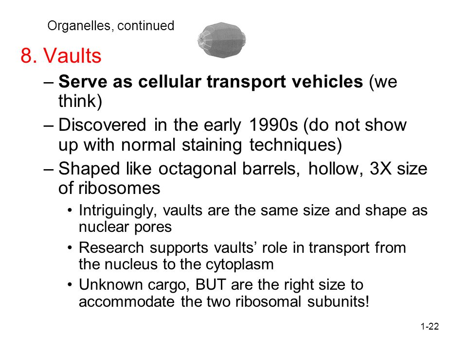 1-22 Organelles, continued 8.
