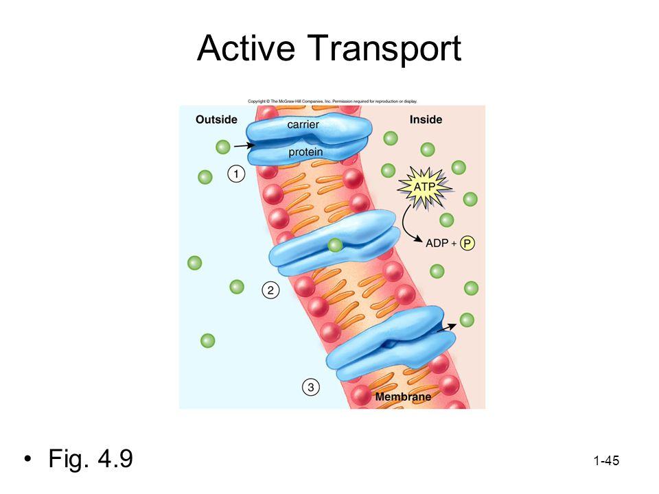 1-45 Active Transport Fig. 4.9