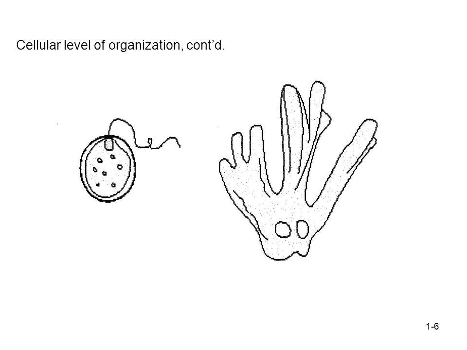 1-6 Cellular level of organization, cont'd.