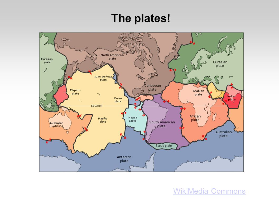 The plates! WikiMedia Commons