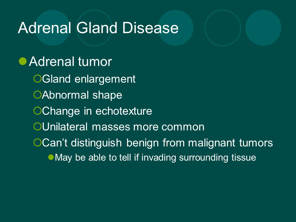 Adrenal Gland Disease Adrenal tumor  Gland enlargement  Abnormal shape  Change in echotexture  Unilateral masses more common  Can't distinguish b