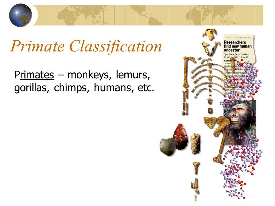 Primate Classification Primates – monkeys, lemurs, gorillas, chimps, humans, etc.