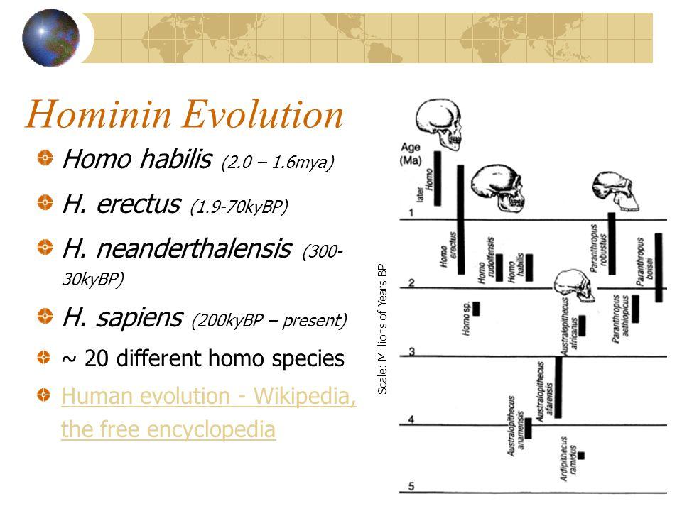 Hominin Evolution Homo habilis (2.0 – 1.6mya) H.erectus (1.9-70kyBP) H.