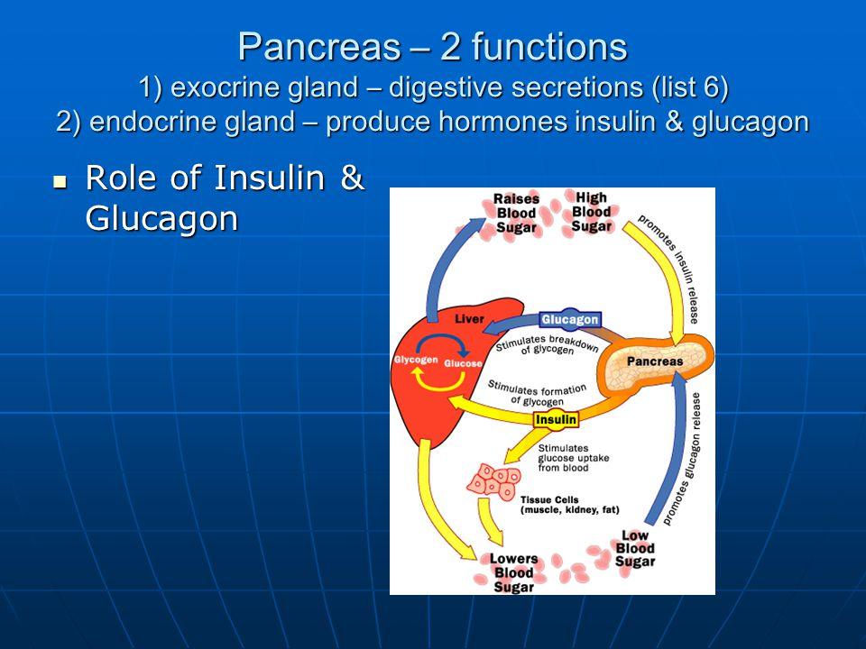 Pancreas – 2 functions 1) exocrine gland – digestive secretions (list 6) 2) endocrine gland – produce hormones insulin & glucagon Role of Insulin & Glucagon Role of Insulin & Glucagon