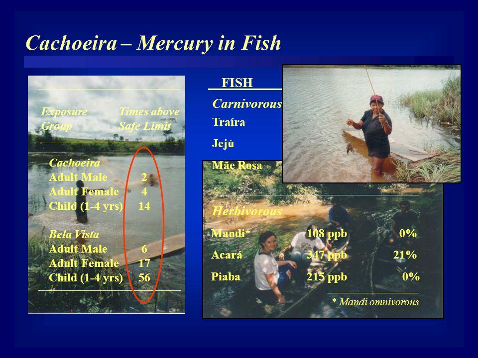 Cachoeira – Mercury in Fish Traíra 925 ppb 68% Jejú 1274 ppb 100% Mãe Rosa 667 ppb 63% Mandi* 108 ppb 0% Acará 347 ppb 21% Piaba 215 ppb 0% FISH Hg (p