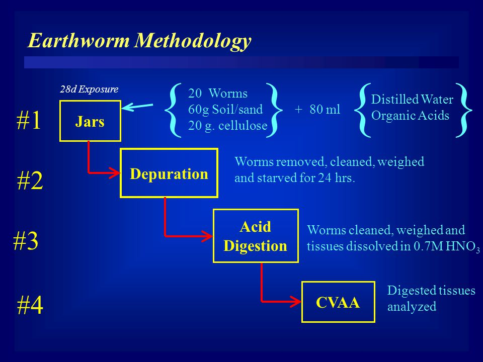 { } Jars 20 Worms 60g Soil/sand + 80 ml 20 g.