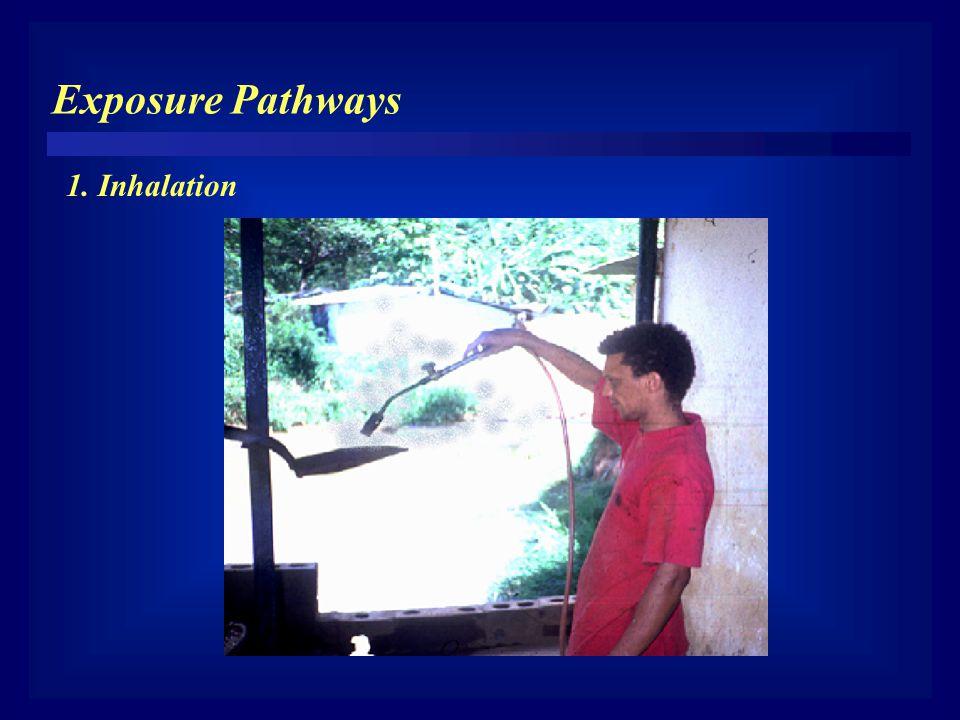 Exposure Pathways 1. Inhalation