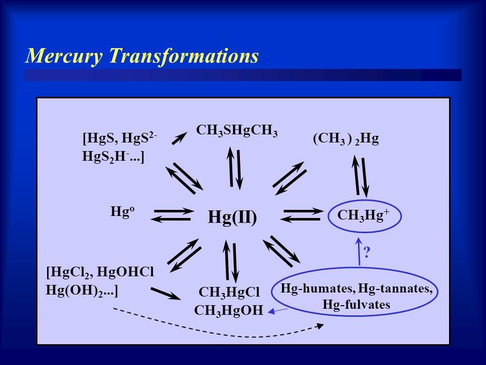 Mercury Transformations Hg(II) Hg o CH 3 Hg + (CH 3 ) 2 Hg CH 3 SHgCH 3 [HgS, HgS 2- HgS 2 H -...] Hg-humates, Hg-tannates, Hg-fulvates [HgCl 2, HgOHC