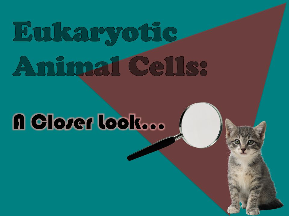  Located around the outside of the cell  Contains proteins and lipids  Surrounds the cytoplasm of a cell  Serves almost the same purpose as skin Cell Membrane