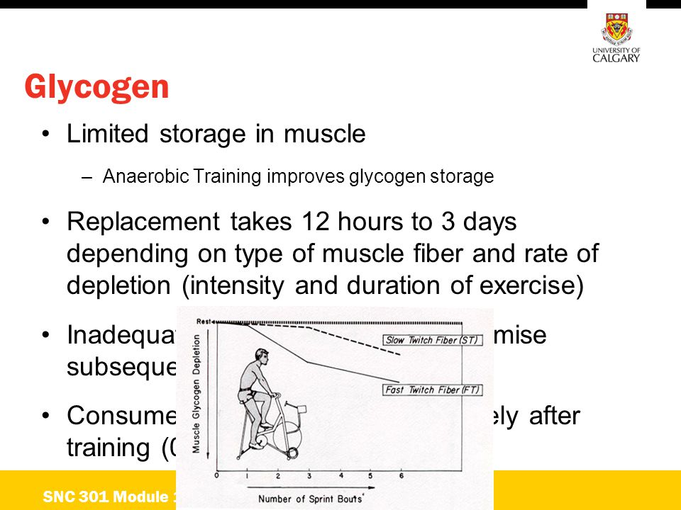 Glycogen Limited storage in muscle –Anaerobic Training improves glycogen storage Replacement takes 12 hours to 3 days depending on type of muscle fibe