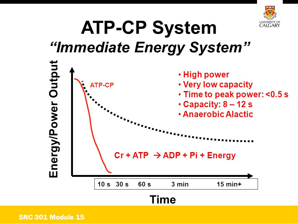 """ATP-CP System """"Immediate Energy System"""" Energy/Power Output Time ATP-CP 10 s 30 s 60 s 3 min15 min+ SNC 301 Module 15 High power Very low capacity Tim"""