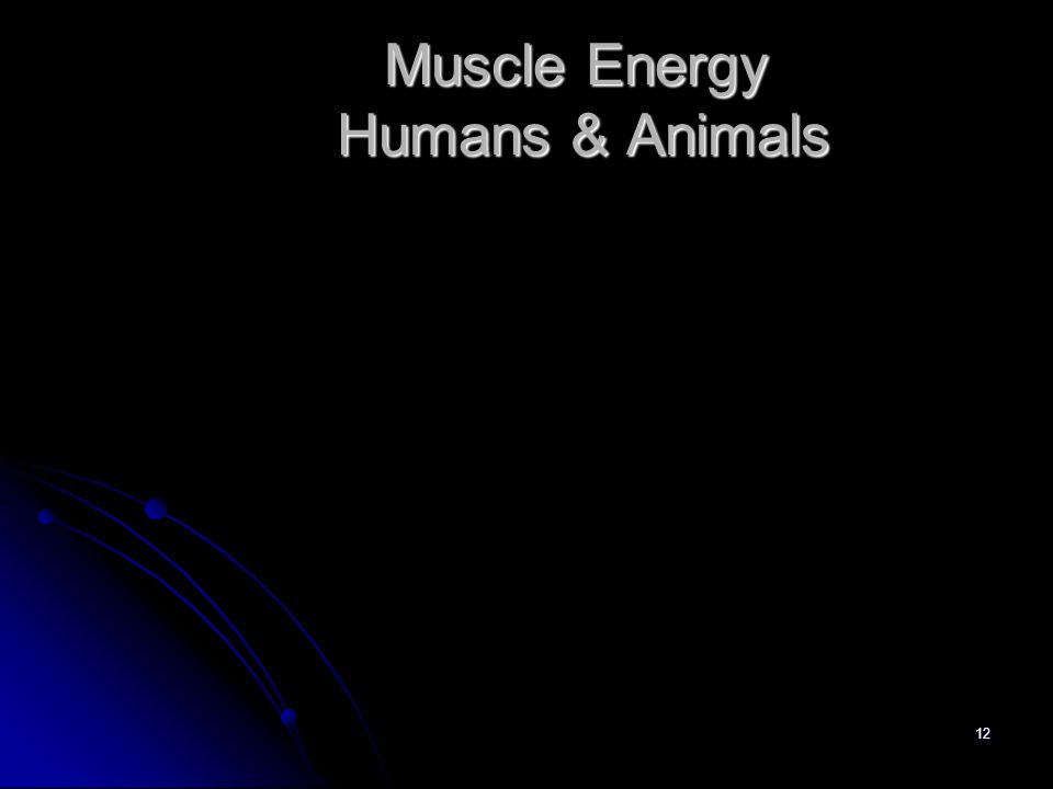 12 Muscle Energy Humans & Animals