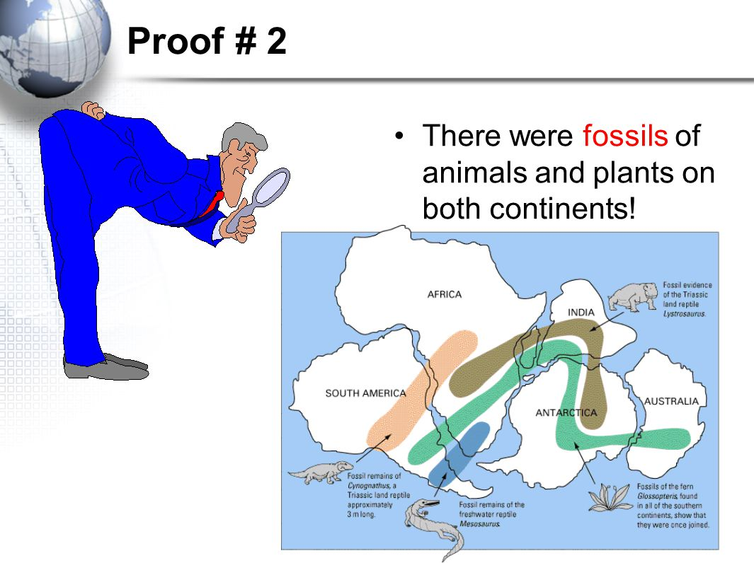 essay evidence supports theory continental drift and plate