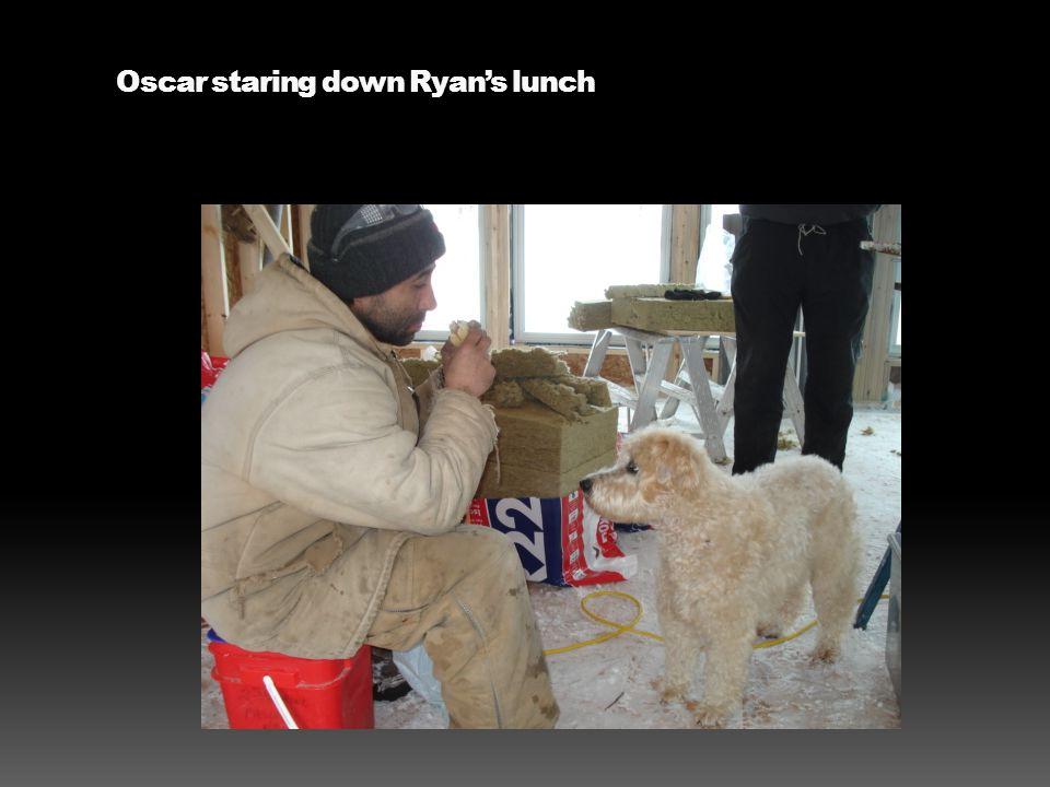 Oscar staring down Ryan's lunch