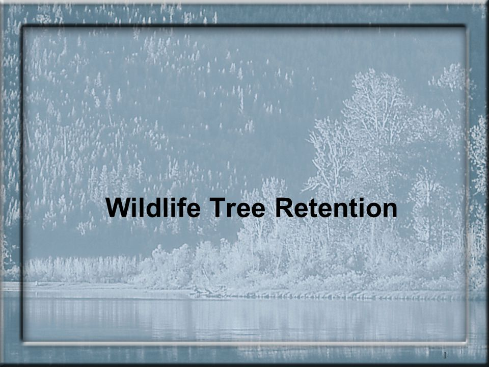 1 Wildlife Tree Retention