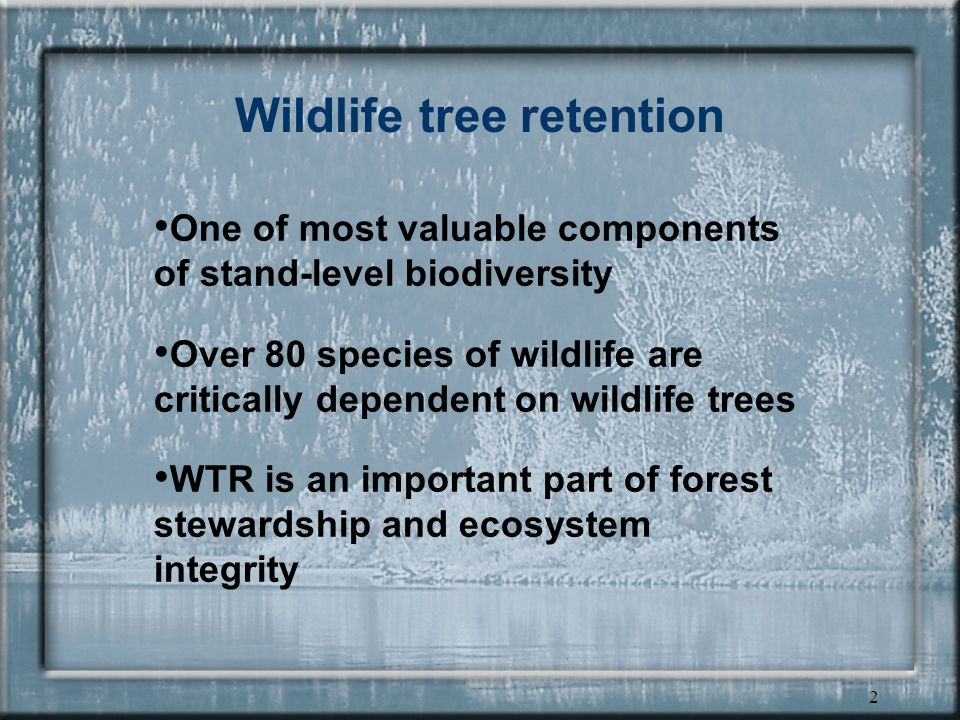 2 Wildlife tree retention One of most valuable components of stand-level biodiversity Over 80 species of wildlife are critically dependent on wildlife trees WTR is an important part of forest stewardship and ecosystem integrity