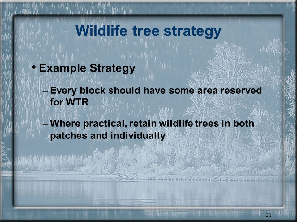 21 Wildlife tree strategy Example Strategy –Every block should have some area reserved for WTR –Where practical, retain wildlife trees in both patches and individually