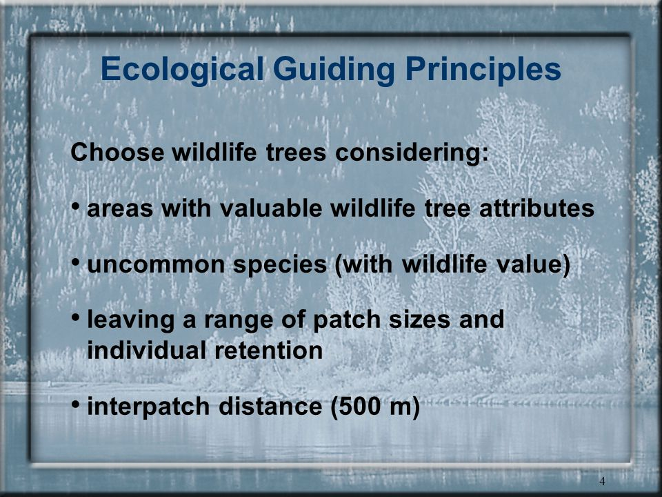 4 Ecological Guiding Principles Choose wildlife trees considering: areas with valuable wildlife tree attributes uncommon species (with wildlife value) leaving a range of patch sizes and individual retention interpatch distance (500 m)