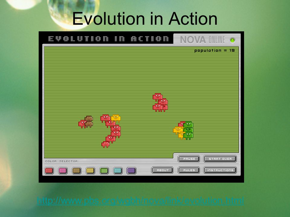 Evolution in Action http://www.pbs.org/wgbh/nova/link/evolution.html
