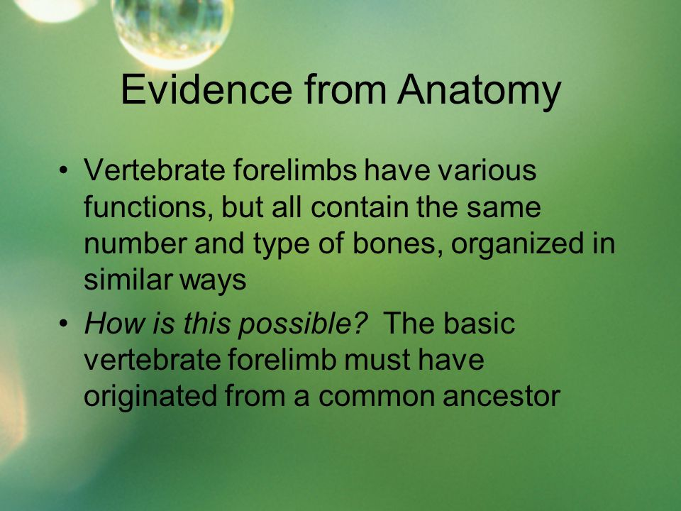Evidence from Anatomy Vertebrate forelimbs have various functions, but all contain the same number and type of bones, organized in similar ways How is