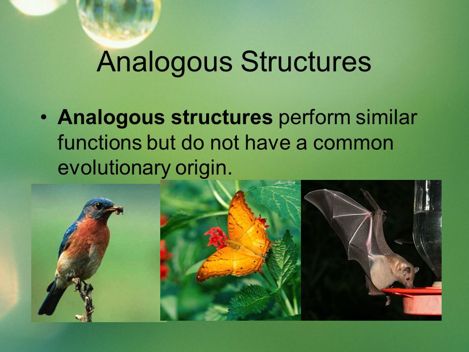 Analogous Structures Analogous structures perform similar functions but do not have a common evolutionary origin.