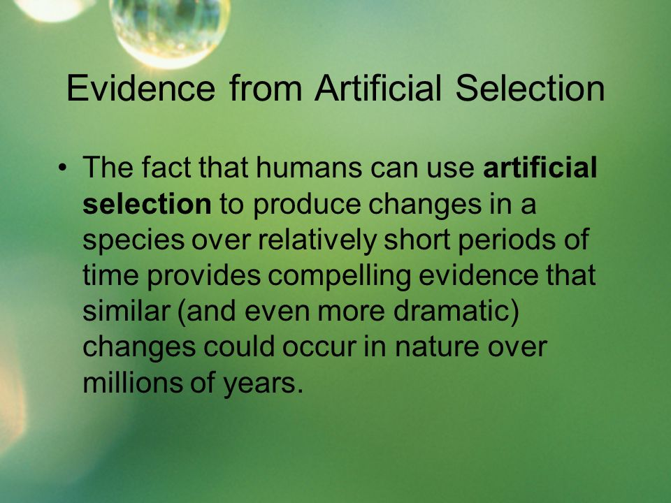 Evidence from Artificial Selection The fact that humans can use artificial selection to produce changes in a species over relatively short periods of