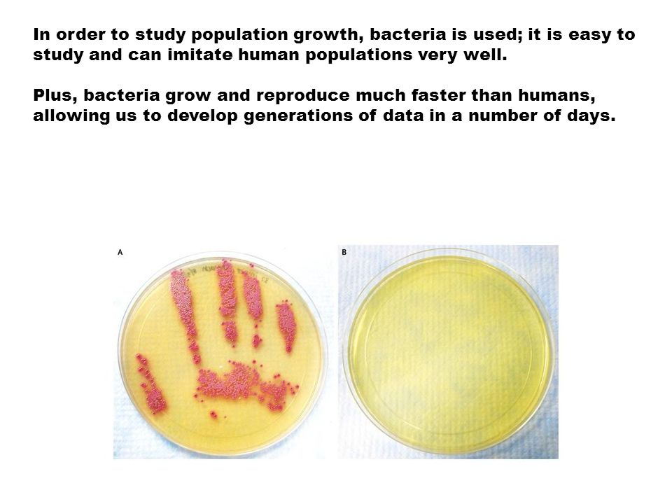 Exponential Growth Bacteria (like people), grow exponentially.